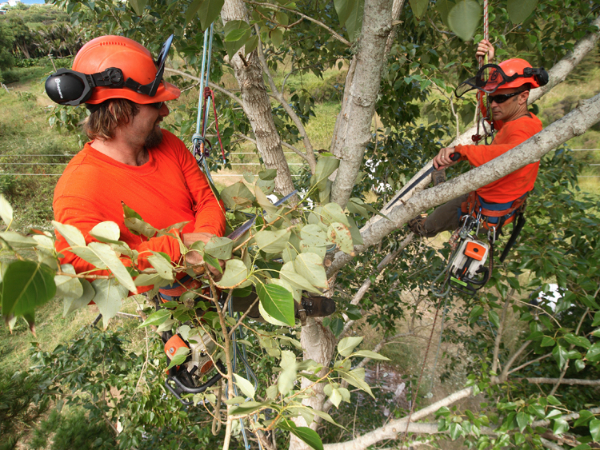 commercial tree maintenance-96