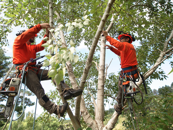 commercial tree pruning-455