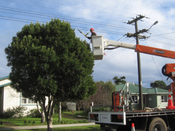 Asplundh Nz Residential Power Line Clearing Amp Tree Pruning