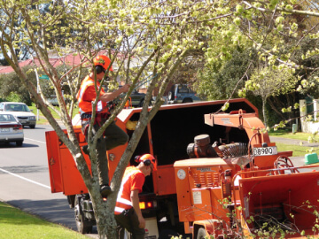 residential tree maintenance services-309