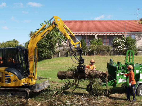 residential tree removals-256