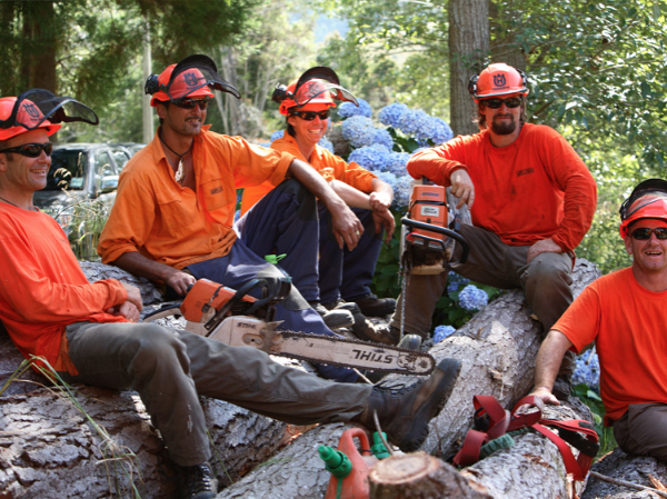 arborist jobs new zealand asplundh